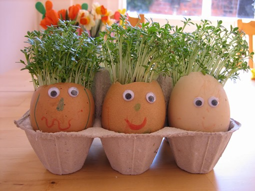 Яйца в коробке с пророщенным кресс-салатом