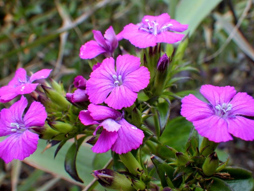 花の写真2