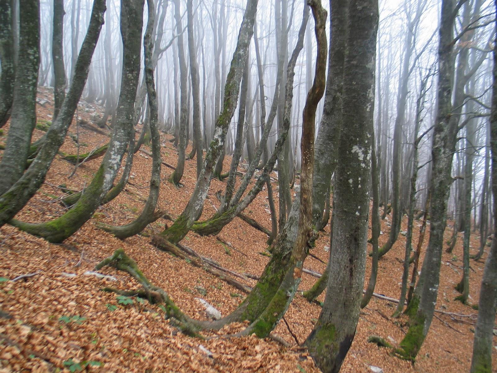 Jesenovanje, Črni dol 2005 - Jesenovanje%2B05%2B022.jpg