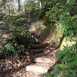 Another set of steps on the Callicoma Walk (154339)
