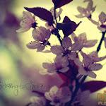 Flower 025_1280px.jpg