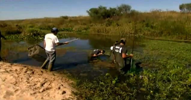 pescando peixe eletrico