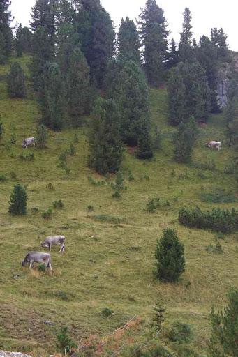 Ce ne sont que des vaches.