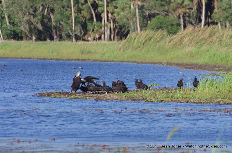 04-06-12 Myaka River State Park - IMGP9916.JPG