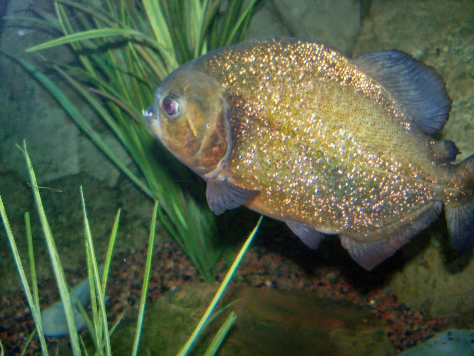 Downtown Aquarium - 116_3874.JPG