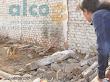 1era visita asistencia animales damnificados terremoto  Pisco 2007 (12)