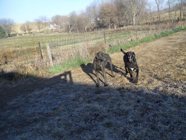 Kiya & Celeste