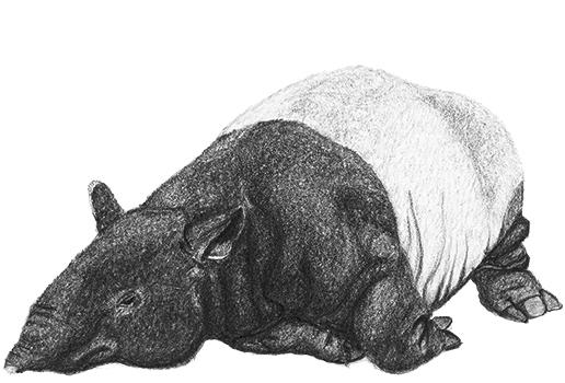 tapirkarte