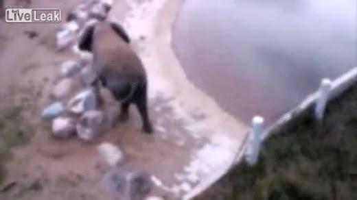 【グロ注意】象が爆弾を食べて内部から爆発して即死