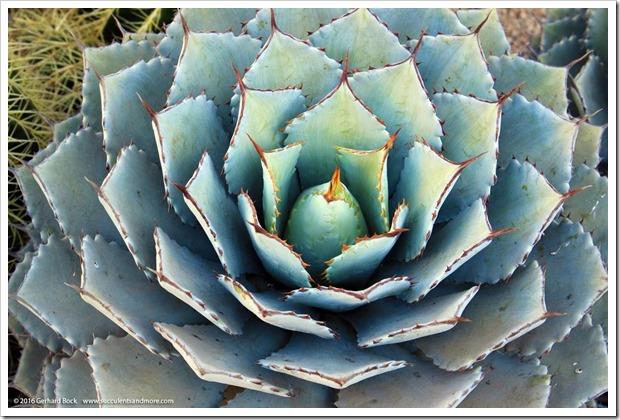 160924_SucculentExtravaganza_079