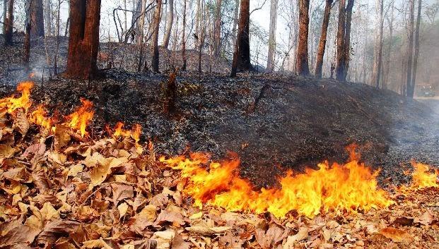 لغز الجزيرة تحترق