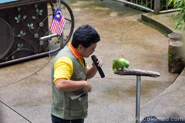 pertunjukkan burung