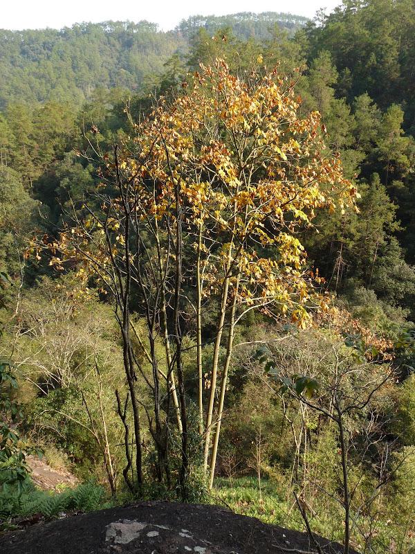 Chine .Fujian.Wuhi shan B - P1030358.JPG