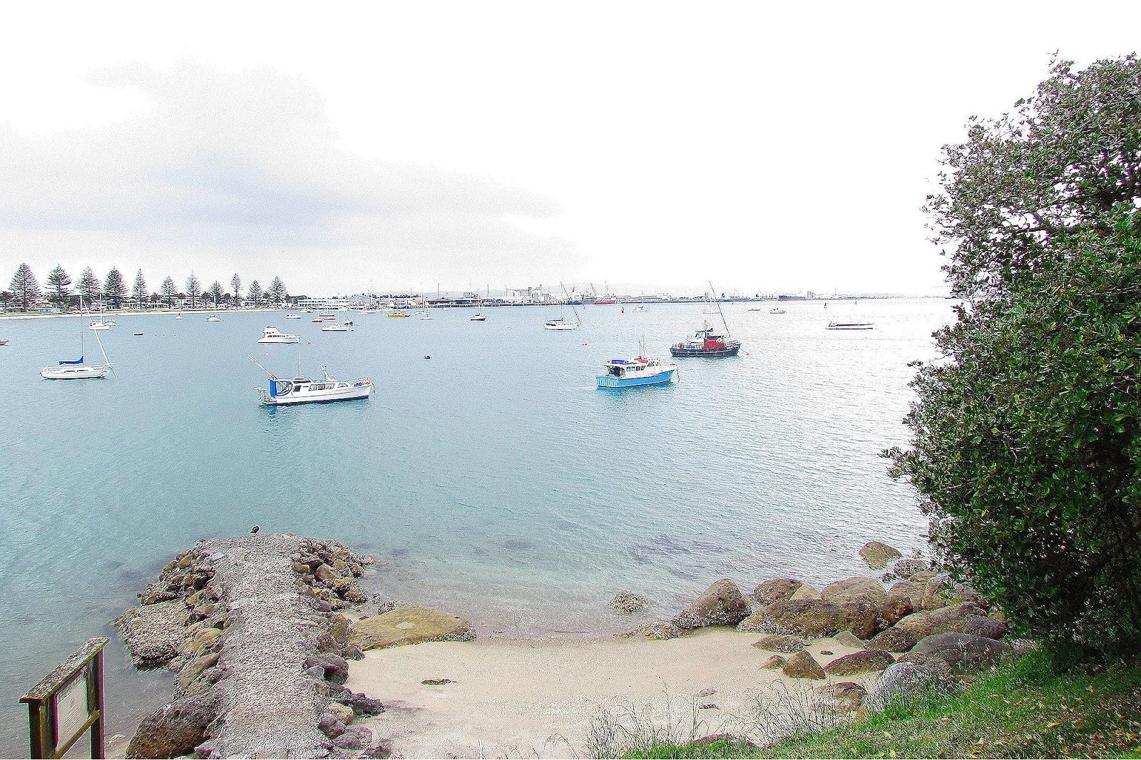 Tauranga Harbour.jpg