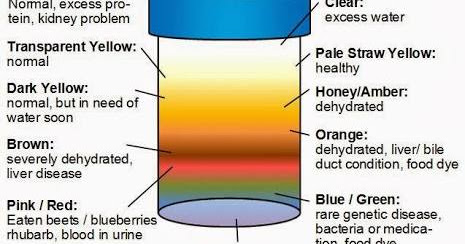 Abnormal Urine Color: What It Tells And Doesnt Tell