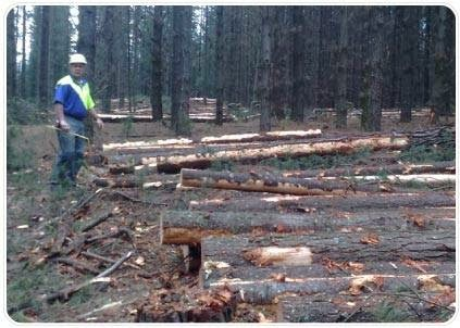 Bickford Forestry Services, Forestry Service, 15 Tarwin Dr, Croydon Hills VIC 3136, Reviews