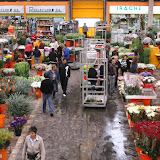 Mercat de Flor i Planta Ornamental de Catalunya - IMG_7308.JPG