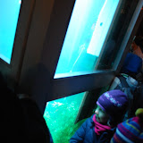Hebben ze hier toch wel en aquarium gemaakt van een telefooncel zeker!
