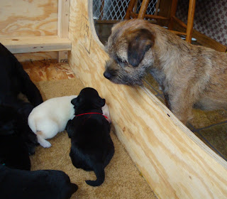 """""""Finally, they let me look at Shiner's babies""""""""Wonder if they can play yet?!"""""""