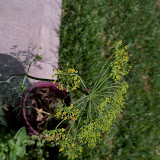 Gardening 2011 - 100_0158.JPG