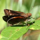 Zabulon Skipper (female)