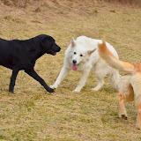 Hundespaziergang 08.03.2013
