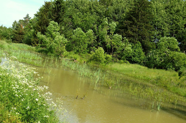 W Polanach Surowicznych - 18.06.2011_022.jpg