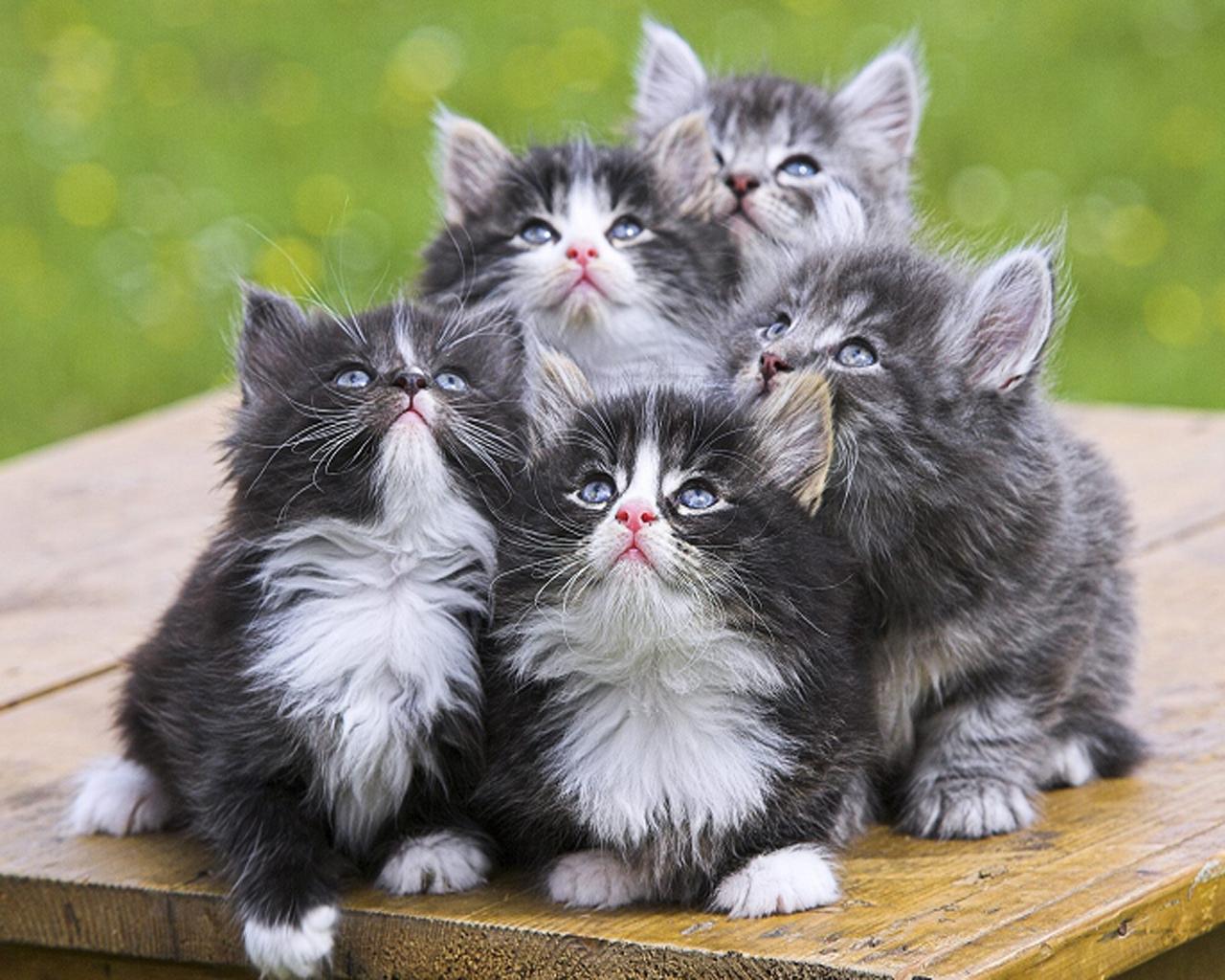 Pecinta Kucing Google