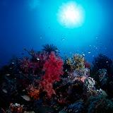 Underwater, Papua New Guinea