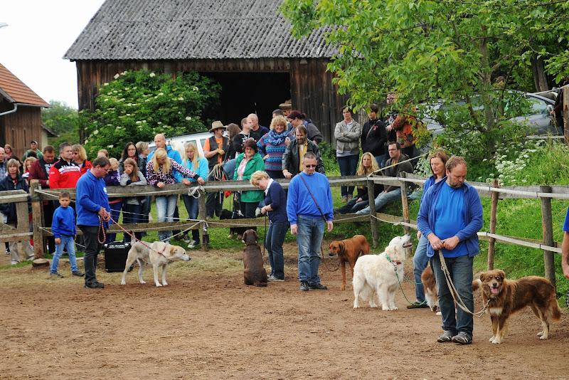 20130630 Auftritt Fenkensees von (Uwe Look) - DSC_3980.JPG