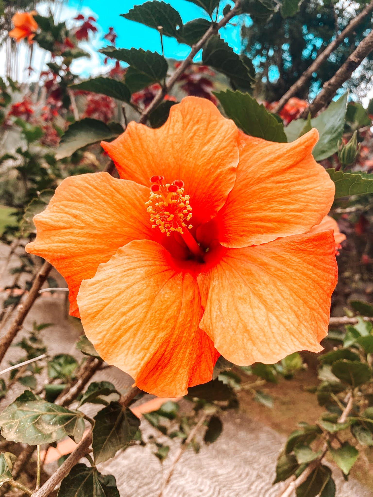 A la découverte du Nord de la Martinique avec le Jardin de Balata
