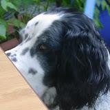 20110629 Hundespaziergang38 - HS%2B38%2B%252818%2529.JPG