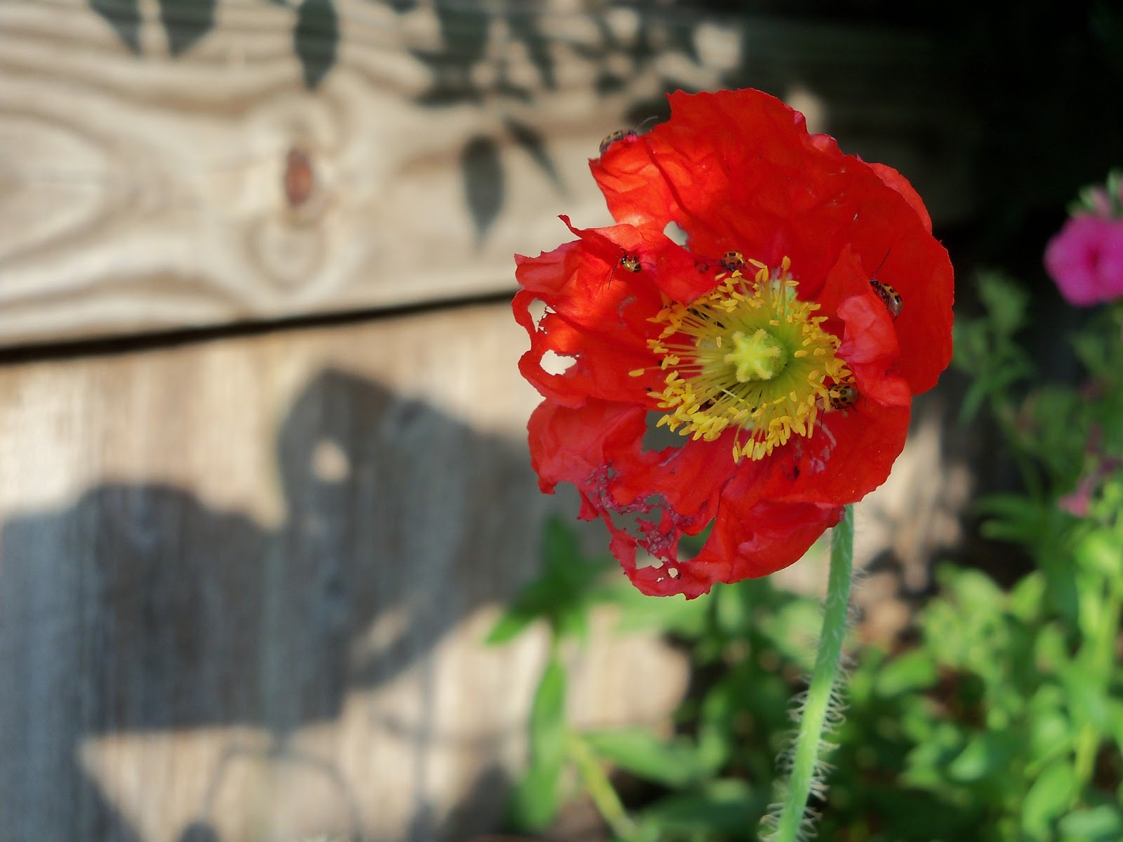 Gardening 2011 - 100_8016.JPG