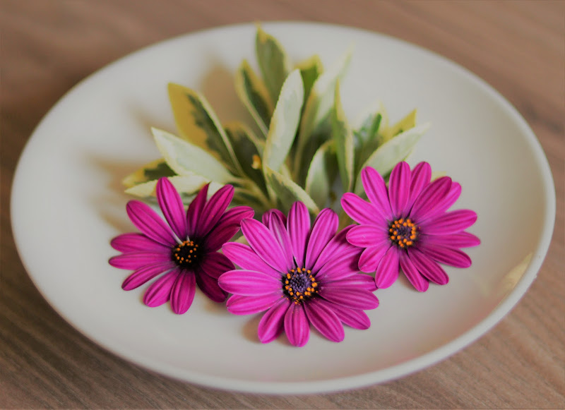 Pink Daisies di Pulce
