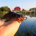 20140715_Fishing_Shpaniv_006.jpg