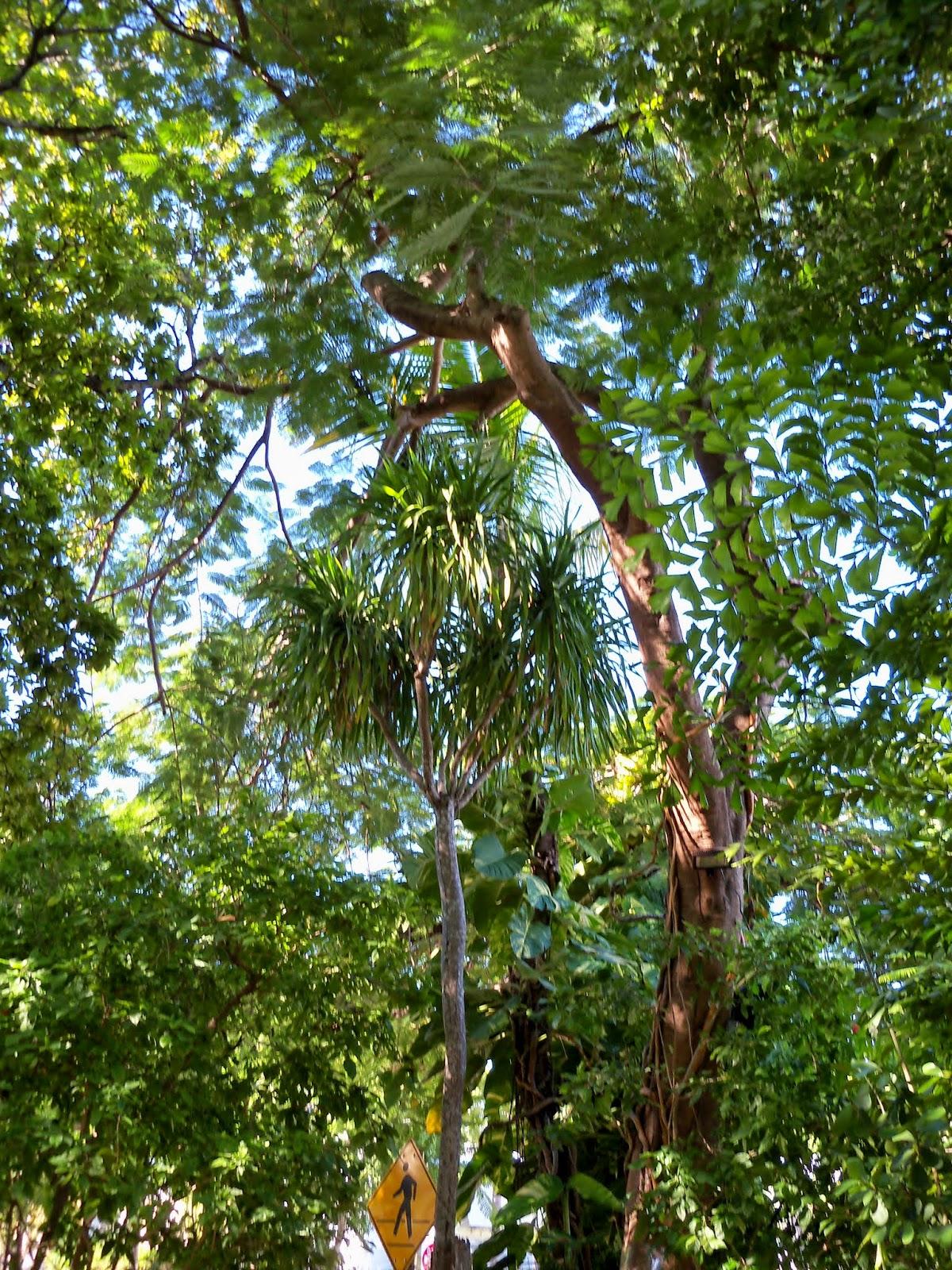 Key West Vacation - 116_5461.JPG