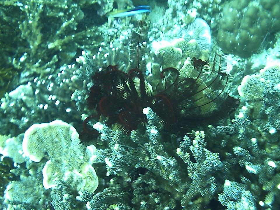 """An underwater """"flower"""""""