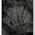 erdő, zúzmara 010.jpg
