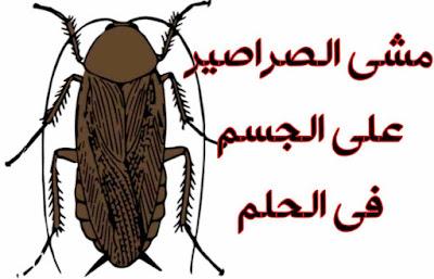 تفسير حلم الصراصير تمشي على الجسم بالتفصيل