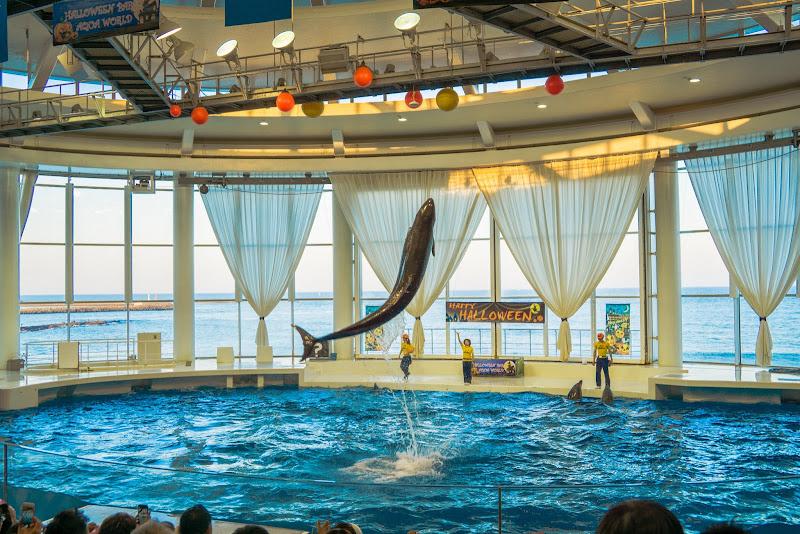 アクアワールド大洗水族館 イルカ・アシカオーシャンライブ 写真6