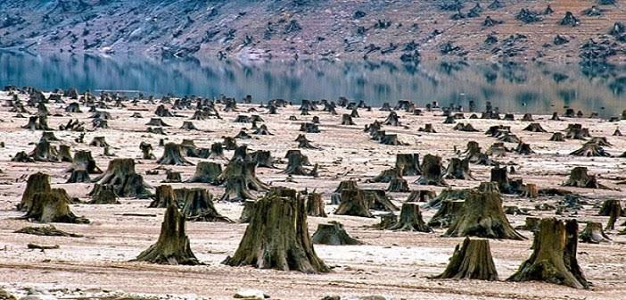 Upaya Kelestarian Lingkungan Di Tengah Pandemi