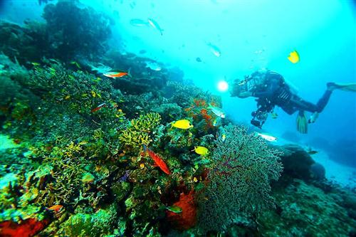 Chicken reef012014Raja Ampat