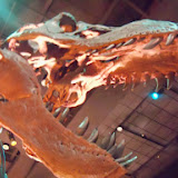 Houston Museum of Natural Science - 116_2665.JPG