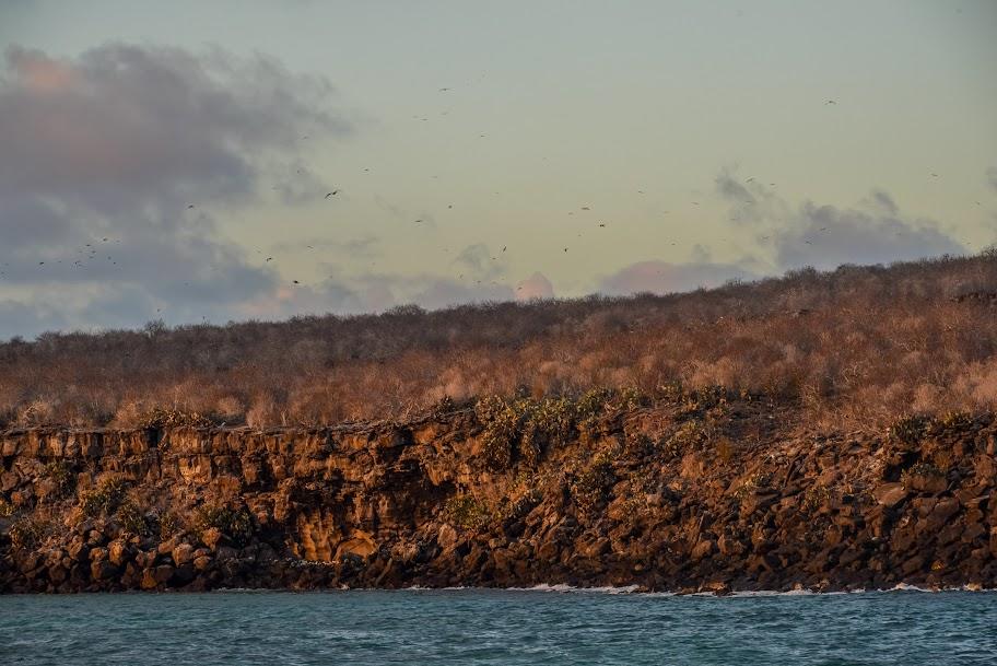 galapagos - Galapagos_FB_2-91.jpg