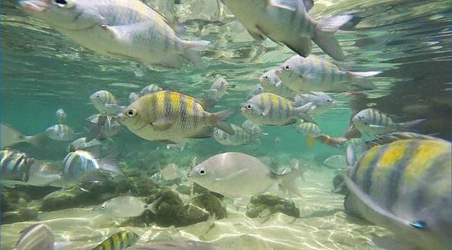 [ataque-de-peixinhos-lagoa-azul-e-verde-ilha-grande%5B4%5D]