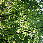 Vacaciones - Agosto 2006 226.jpg