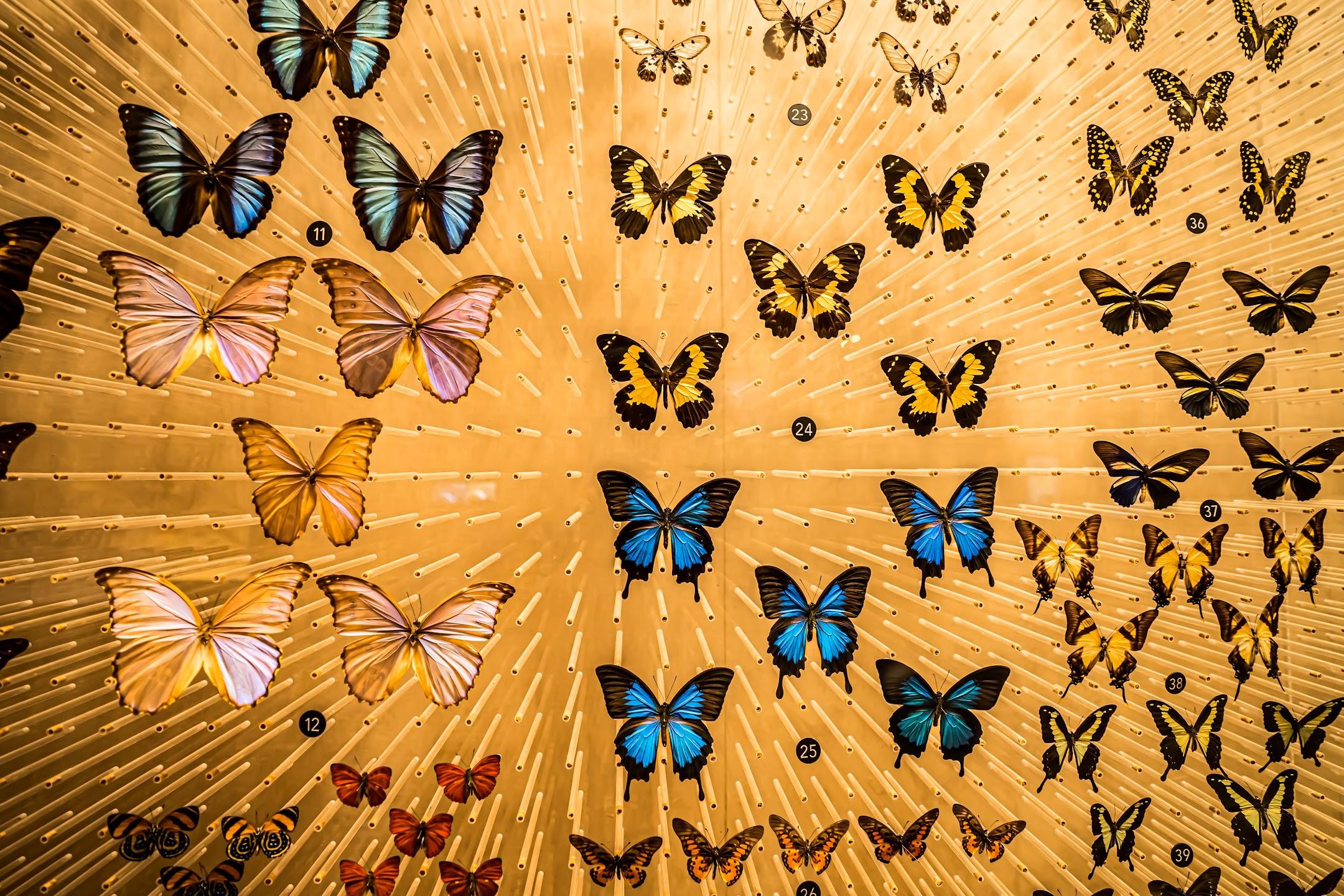 上海自然博物館8