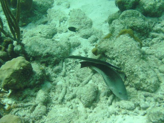 Bonaire 2011 - PICT0018.JPG