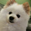 Peter Leung's profile photo