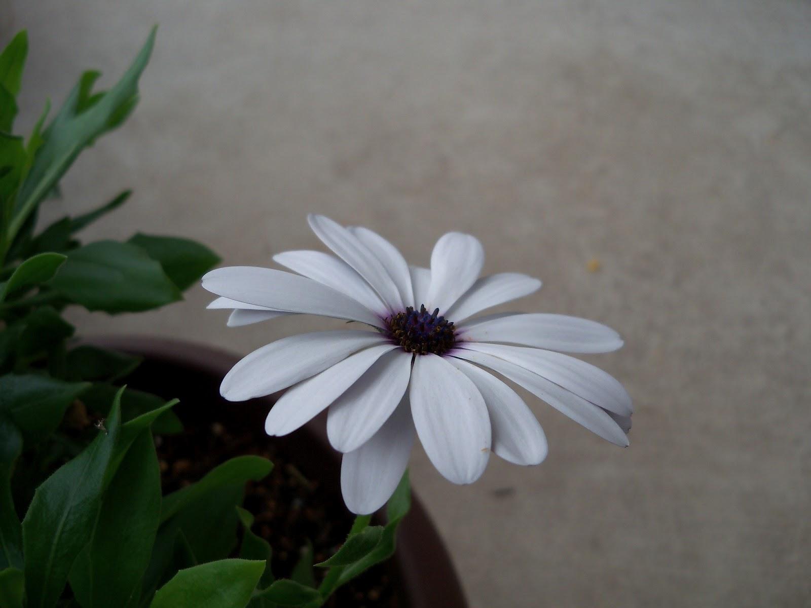 Gardening 2011 - 100_7219.JPG